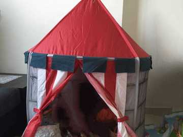 Selling: Tent